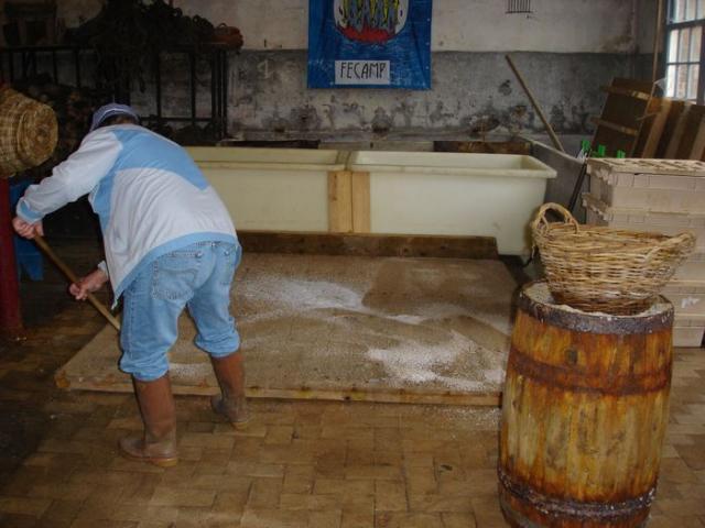 Salage du hareng à la boucane