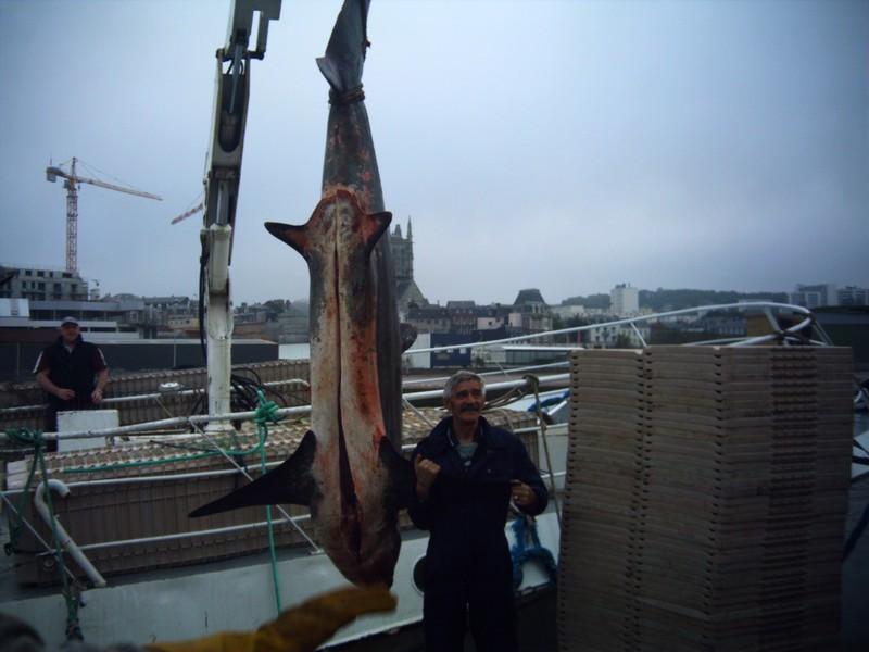 les poissons sont plus gros que les hommes
