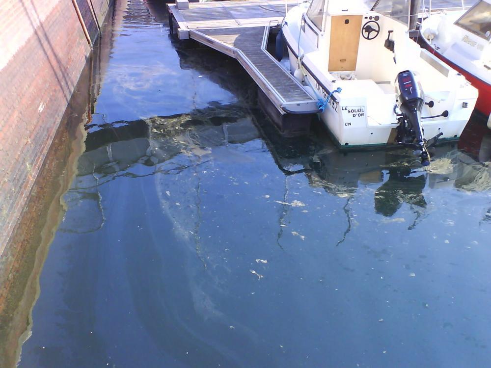 mini maree noire dans le port