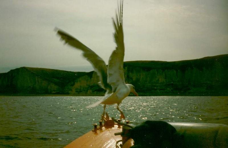 mouette sur bateau