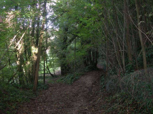 Le bois de l'Epinay
