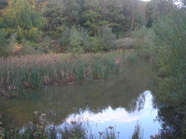 Mare du bois de l'Epinay