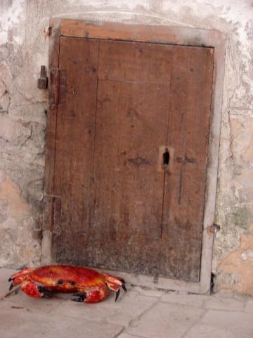 La porte de Jaco