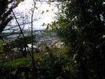Le Pin Maritime, du dessus de la route du Phare