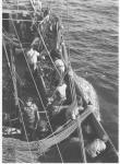 ile aux ours 1954