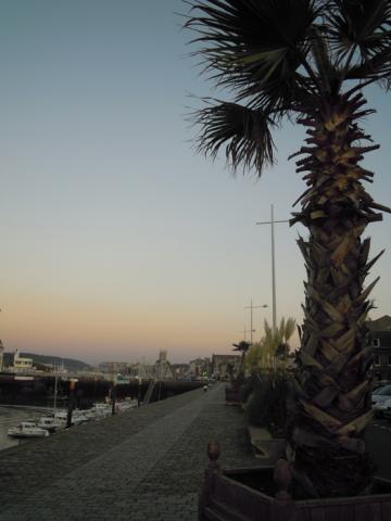 Port et palmiers